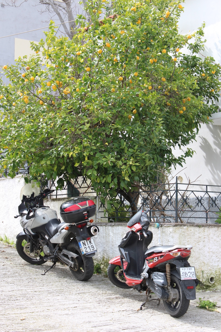 Lemon trees and scooters are everywhere in Mytilini.