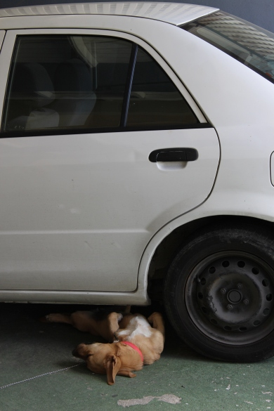 Even the dog needs relief from the sun. Just chillin' under the parked car.