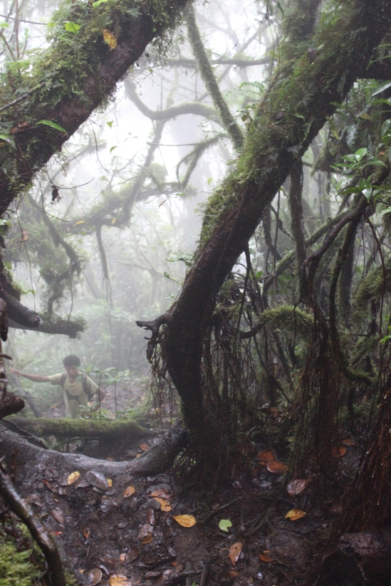 Descending through the cloud forest. That's Edar on the left.