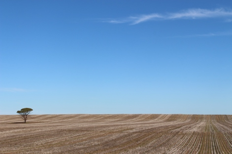 South Australia harvested wheat fields